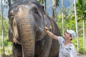 Elephant (2)