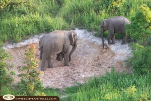 Elephant Conservation Project