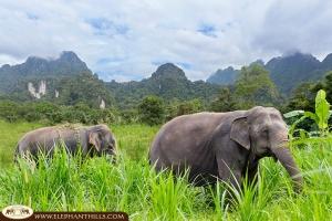 NEWS - Elephants in Thailand