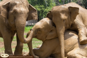Elephant love at Elephant Hills family