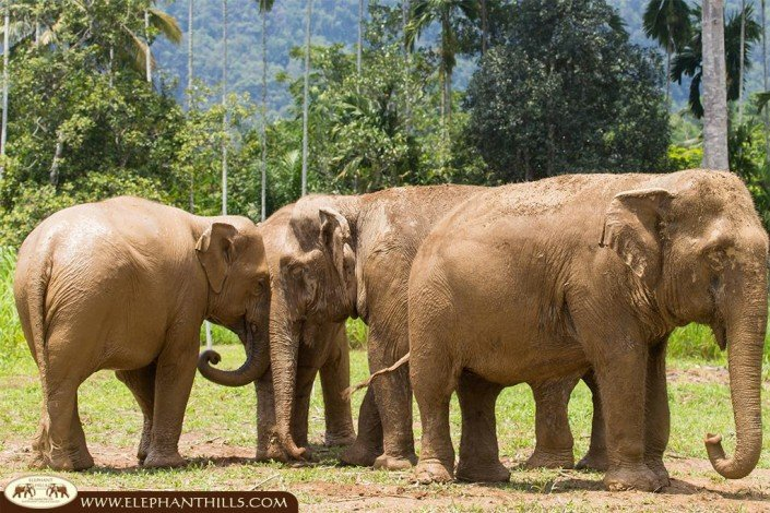Part of the happy Elephant Hills elephant family