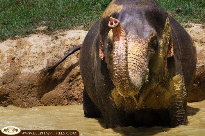 Splashing in the elephant pool