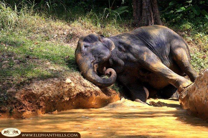 Scrubbing in the elephant pool