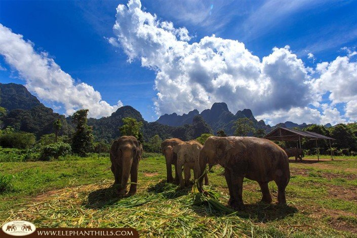 Elephant Hills Thailand hosts elephants in a large enclosure
