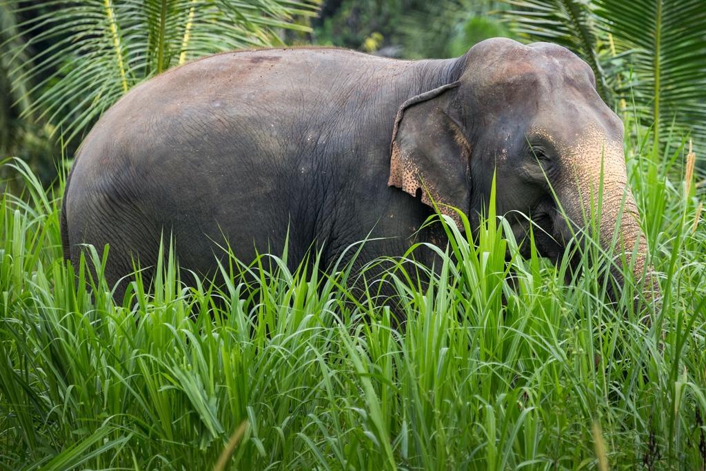 JUNGLE SAFARI – 2 Days & 1 Night - Elephant Hills, Thailand