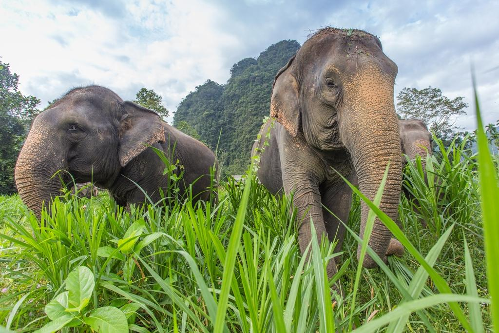 Elephants at Elephant Hills glamping in Khao Sok National Park