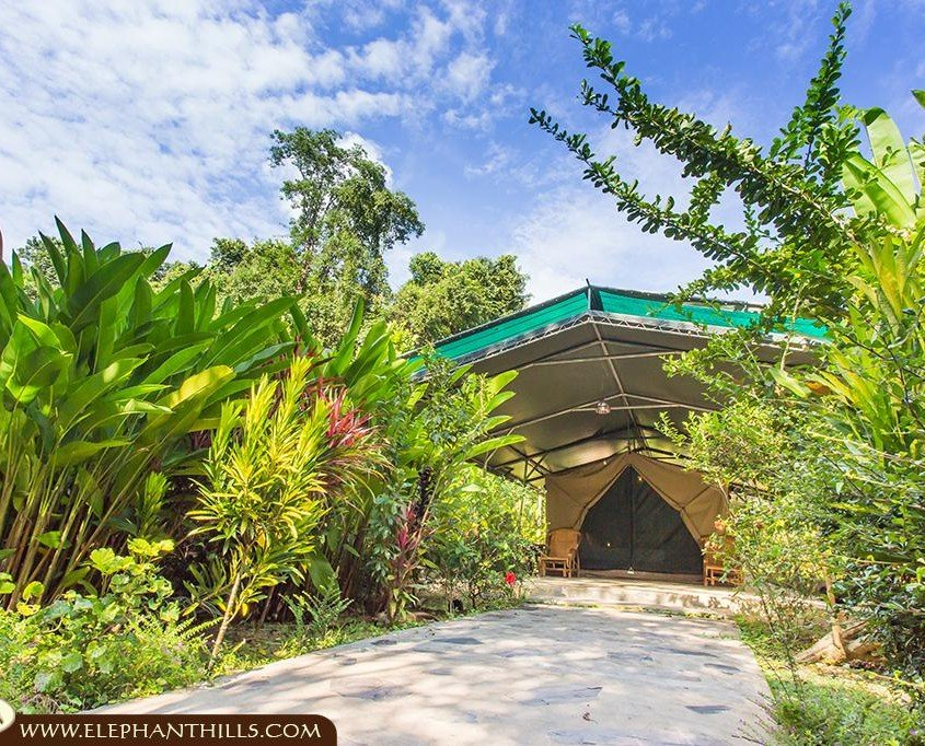 Luxury tented camp in Southern Thailand's rainforest