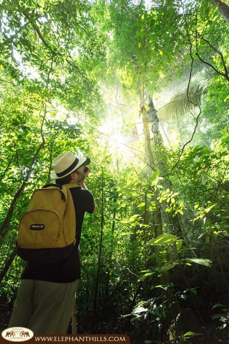Jungle trekking to explore nature and wildlife