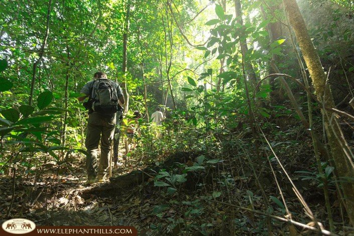 Guided jungle trekking with a personal ranger to be on hand