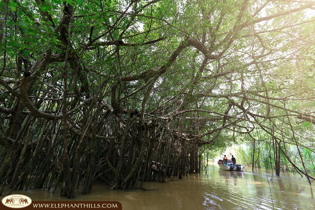 Capturing extraordinary pictures of Mangrove trees, Banyan trees, palms