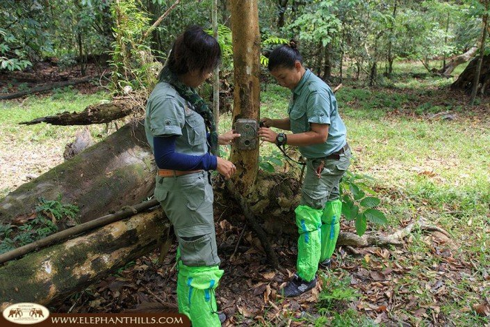 Different camera traps placed in Khao Sok National Park to capture rare wildlife