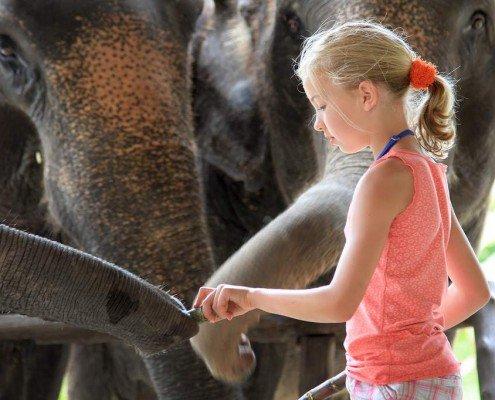 Family Holidays in Thailand: Ethical Elephant Experience at Elephant Hills Luxury Tented Camp Khao Sok National Park Thailand - no Elephant Riding or Trekking