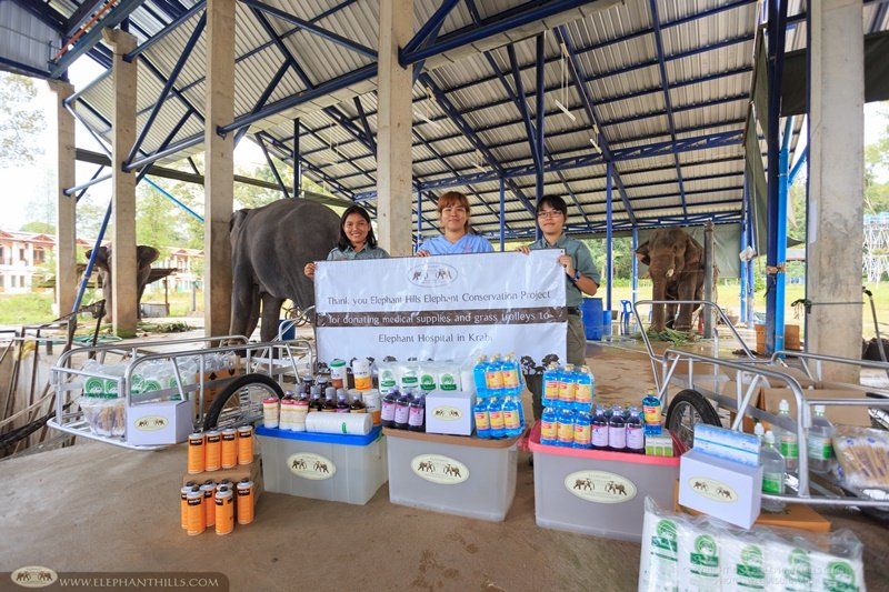 World Elephant Day Donation Elephant Hills