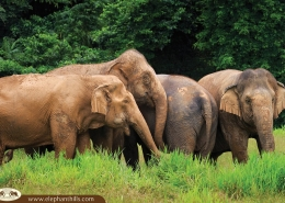 Ethical Elephant Experience at Elephant Hills