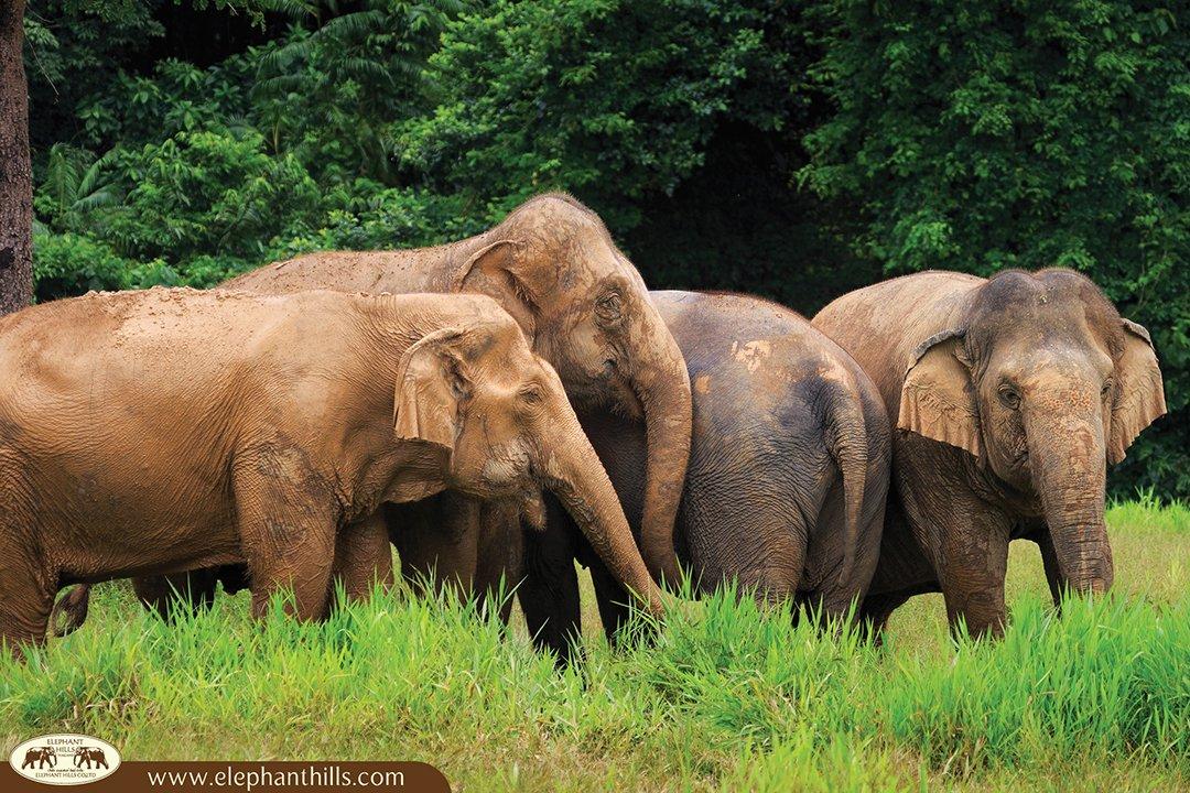 Ethical Elephant Experience at Elephant Hills