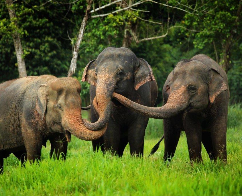 Ethical Elephant Experience