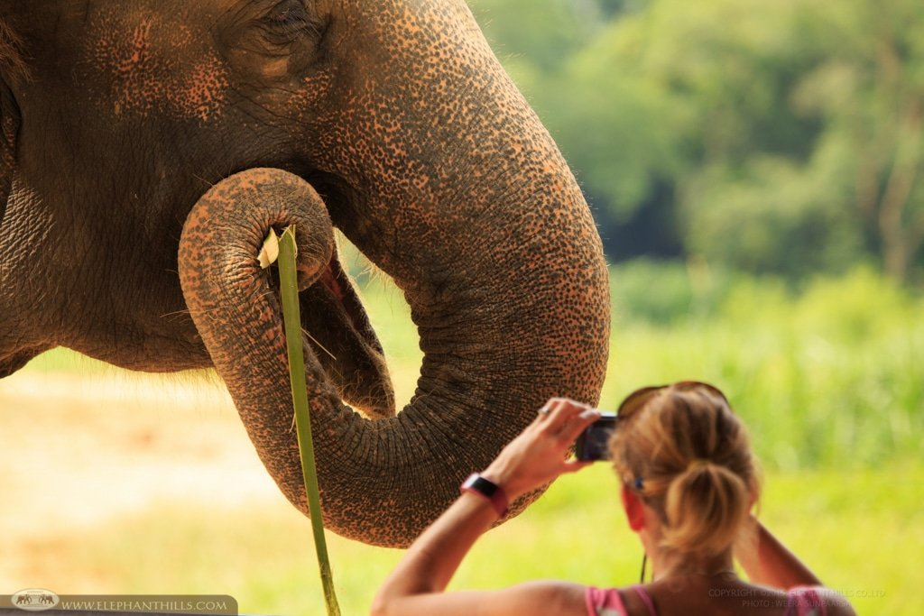 Elephants eat roots, grasses, fruits, and bark. An adult elephant eats up to 250 kilograms in a single day
