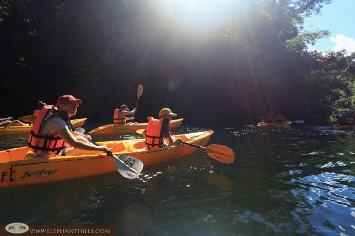 Kayaking to spot wildlife