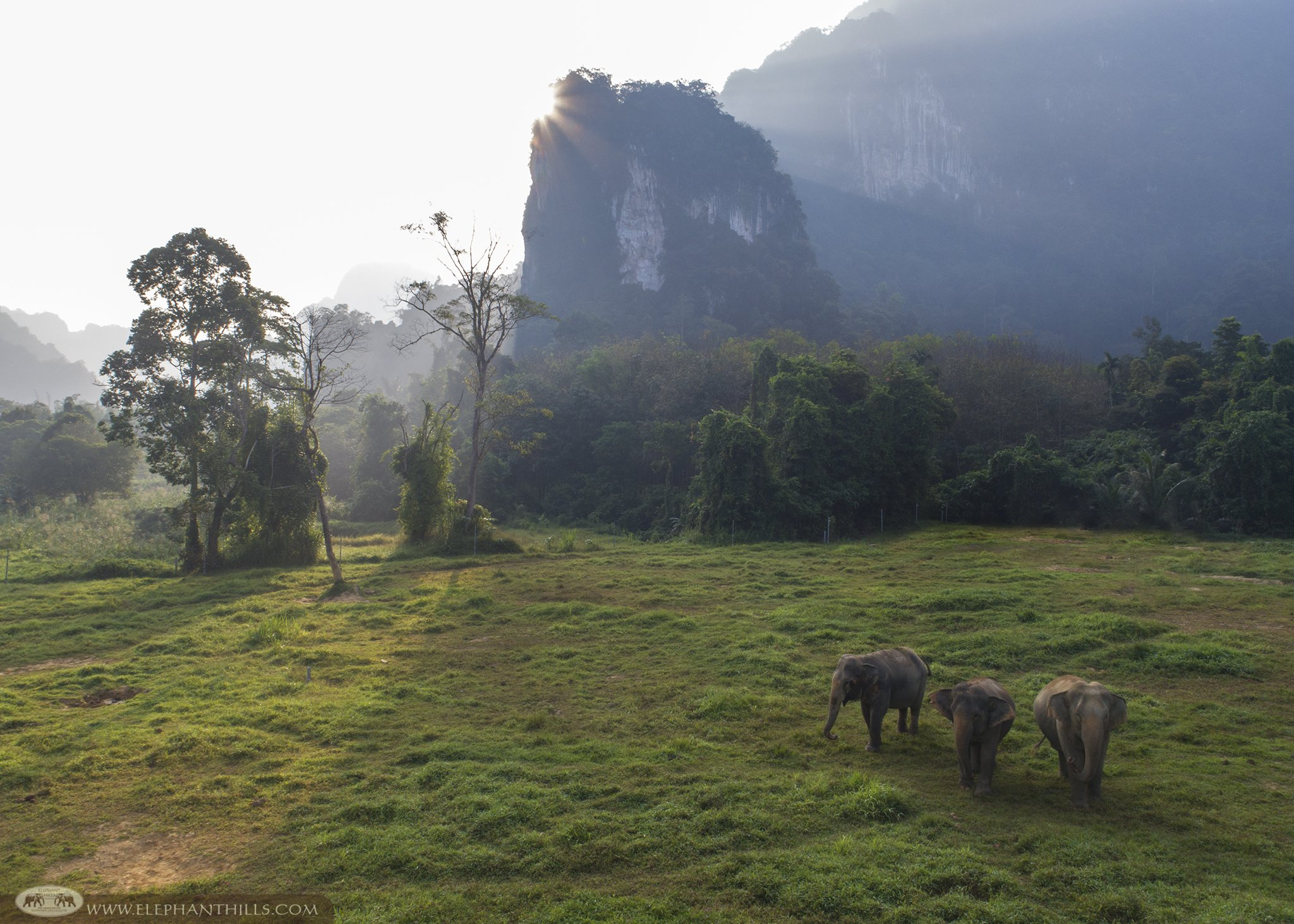 The elephants are living in family group like a human