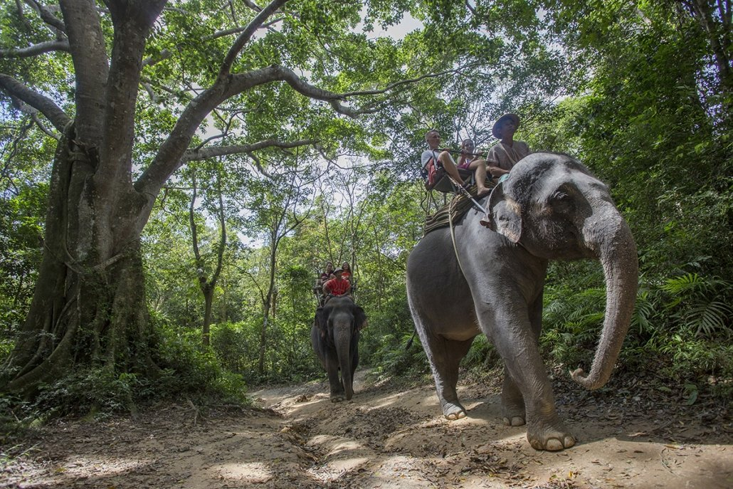 Riding elephants for travelers in tourist industry