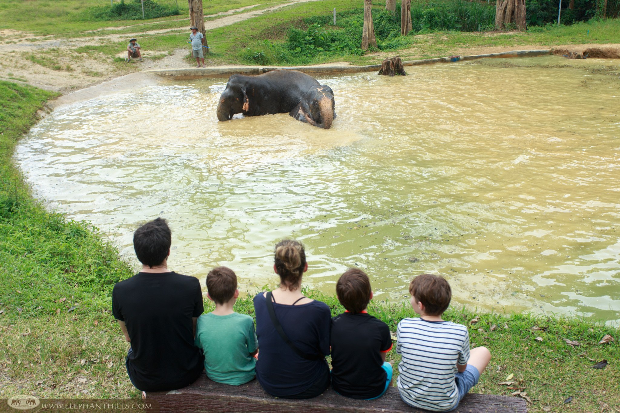 The family are watching an elephant playing in their swimming pool