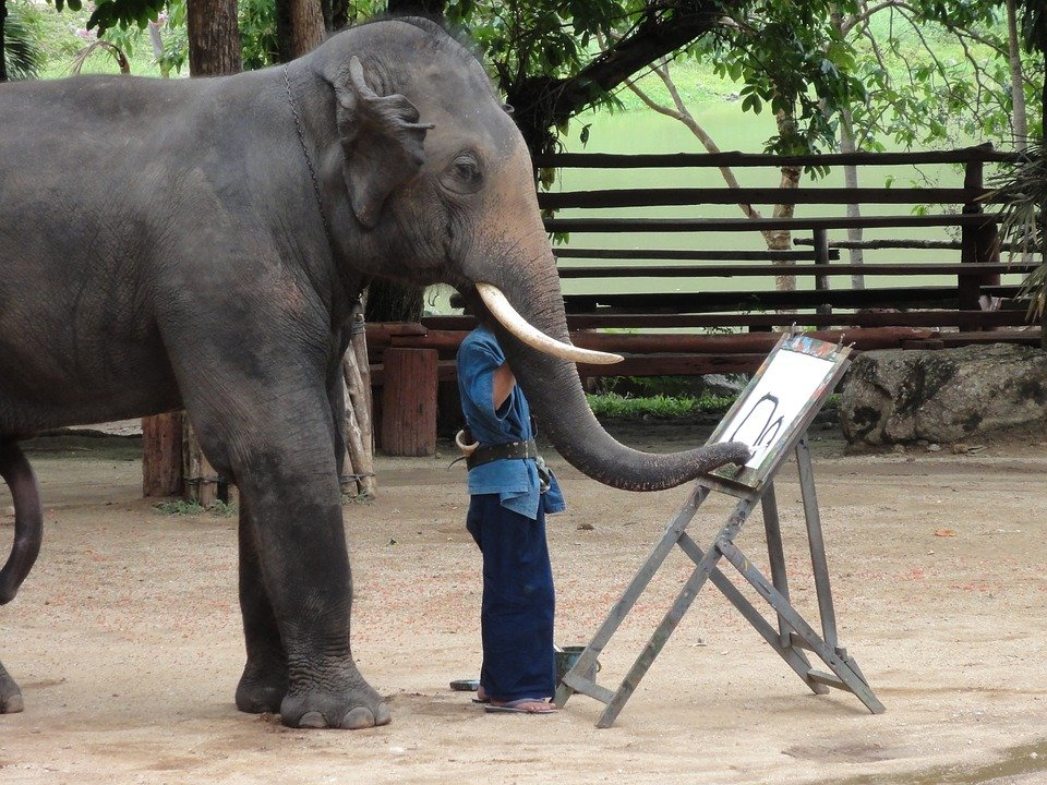 An Elephant drawing a picture in the tourist industry