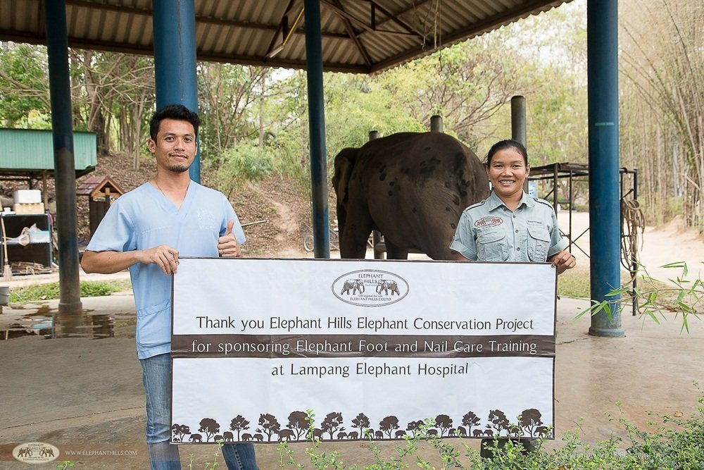 Elephant Hills Elephant Conservation Project - veterinary training