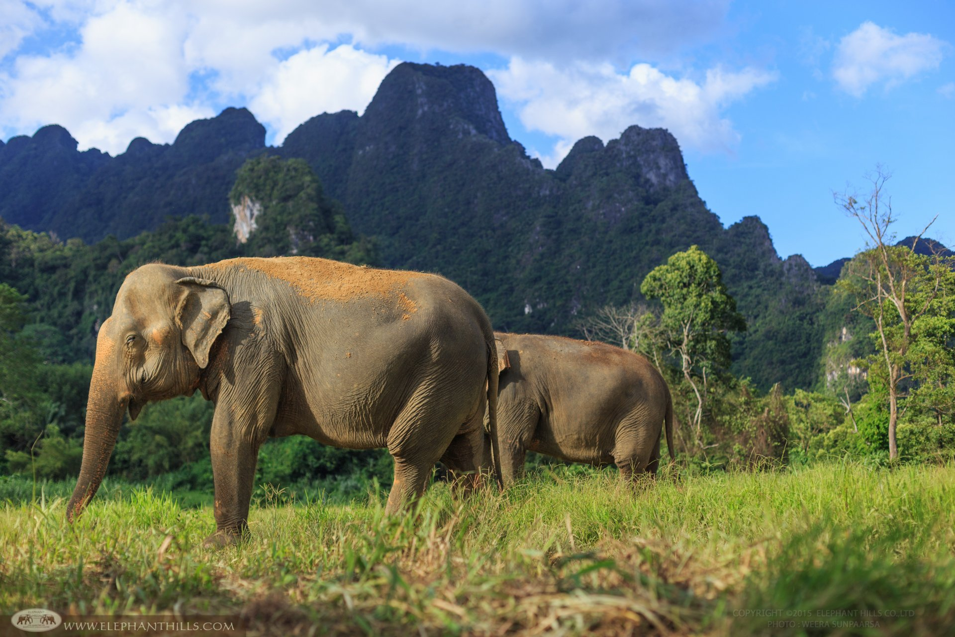 The oldest elephant at Elephant Hills is 75 years old, named Nok Yoong