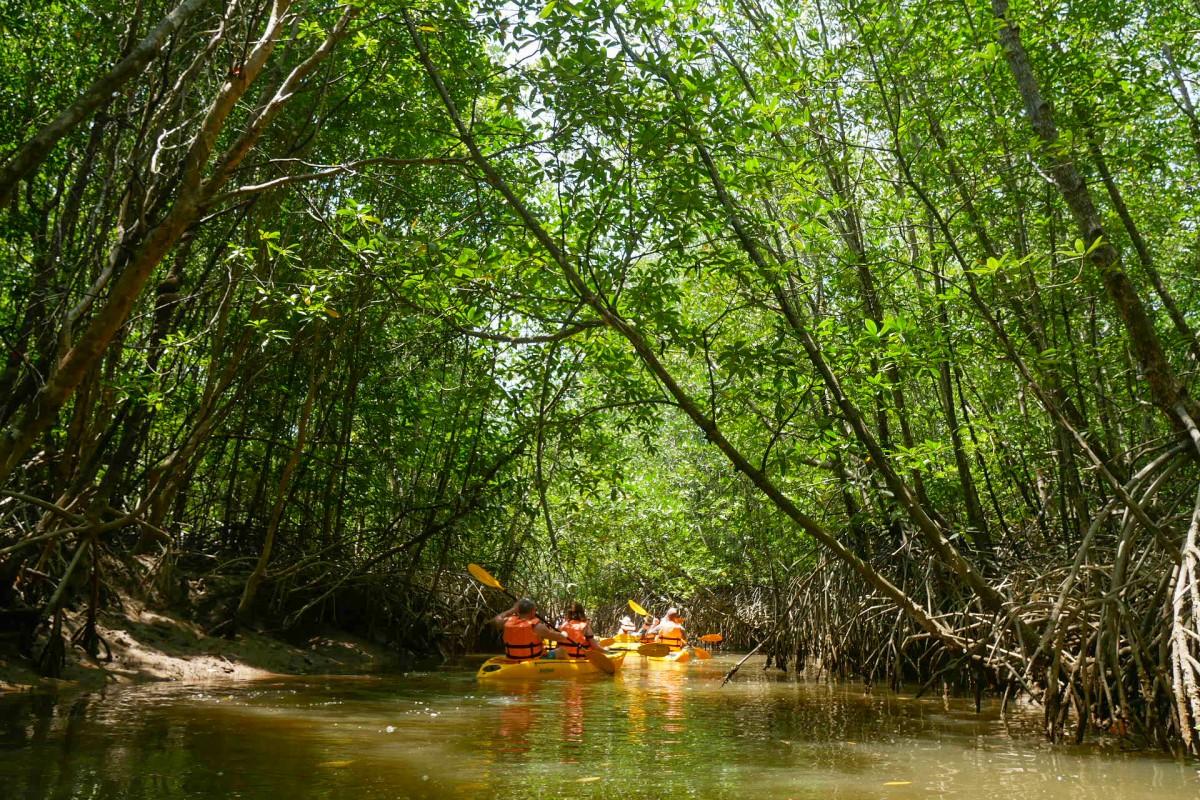 Takuapa Mangrove Swamps